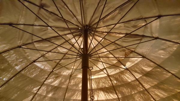 Umbrella Tree by John C. Mannone 1